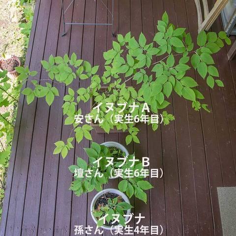 20170610inubuna_4y_son_06.jpg