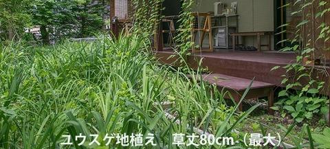 20170612yusuge-jiue01.jpg