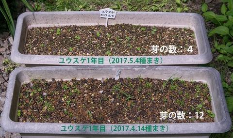 20170612yusuge_planter_1yA&B_20170414&20170504-01.jpg