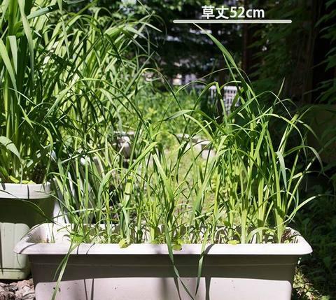 20170612yusuge_planter_3yB_20150510.jpg