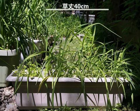 20170612yusuge_planter_4y_20140411.jpg
