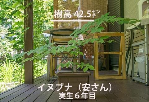 20170616inubuna_6y_an_01.jpg