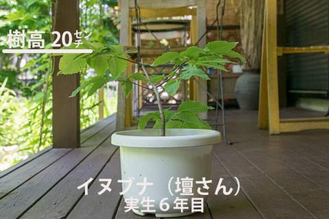 20170616inubuna_6y_dan_01.jpg