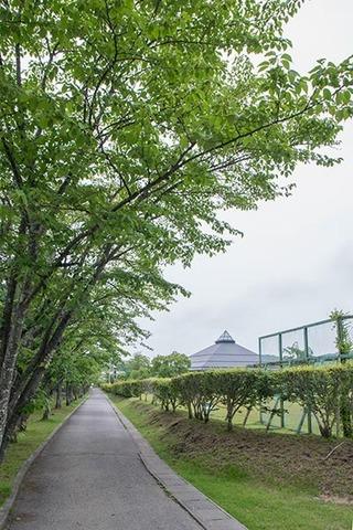 20170618yagasaki-sakura01.jpg