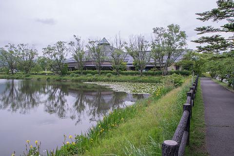 20170618yagasaki-suiren02.jpg