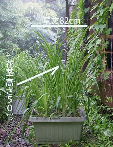 20170621yusuge_planterA_9y_01.jpg