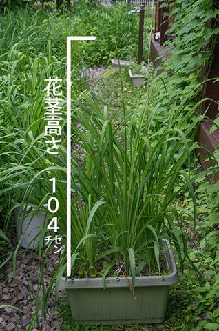 20170629yusuge_planterA_9y_01.jpg