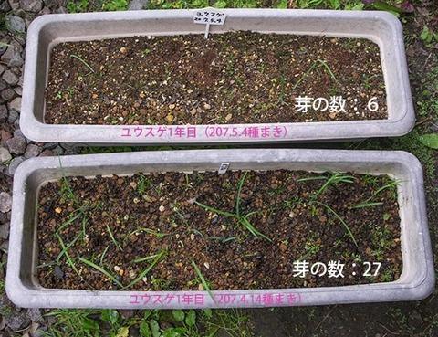 20170630yusuge_planter_1yA&B_20170414&20170504-01.jpg