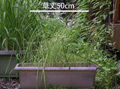 20170630yusuge_planter_3y_A_20150414.jpg