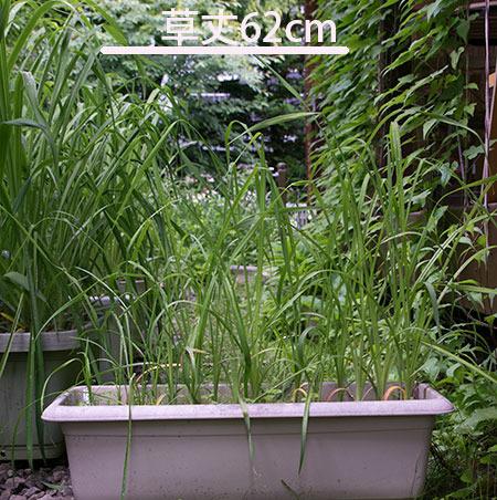 20170630yusuge_planter_3y_B_20150510.jpg
