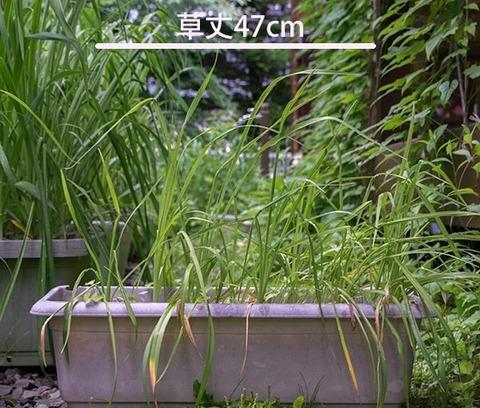 20170630yusuge_planter_4y_20140411.jpg