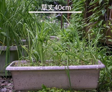 20170630yusuge_planter_5y_20130423.jpg