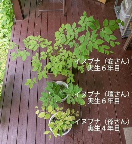 20170703inubuna_4&6y_an_dan_son_01.jpg