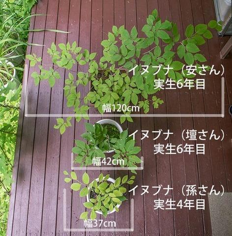 20170713inubuna_4&6y_an_dan_son_01.jpg