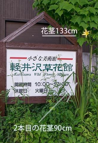 20170714yusuge_kanbanA01-1748.jpg