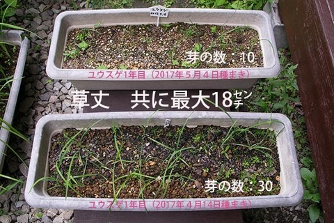 20170716yusuge_planter_1yA&B_20170414&20170504-01.jpg