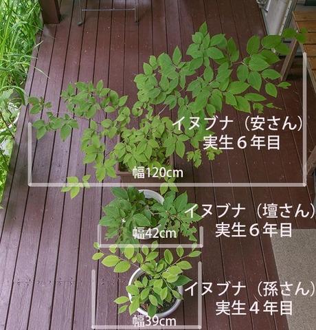 20170724inubuna_4&6y_an_dan_son_01.jpg