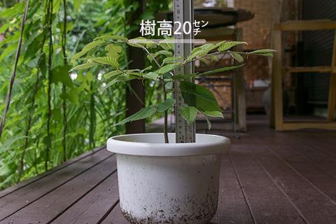 20170724inubuna_4y_son_01.jpg