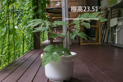 20170724inubuna_6y_dan_01.jpg