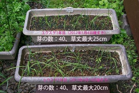 20170730yusuge_planter_1yA&B_20170414&20170504-01.jpg