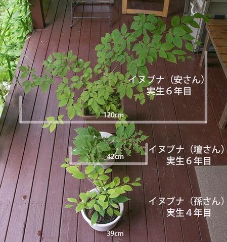 20170802inubuna_4&6y_an_dan_son_01.jpg