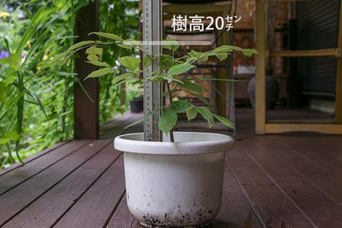 20170802inubuna_4y_son_01.jpg