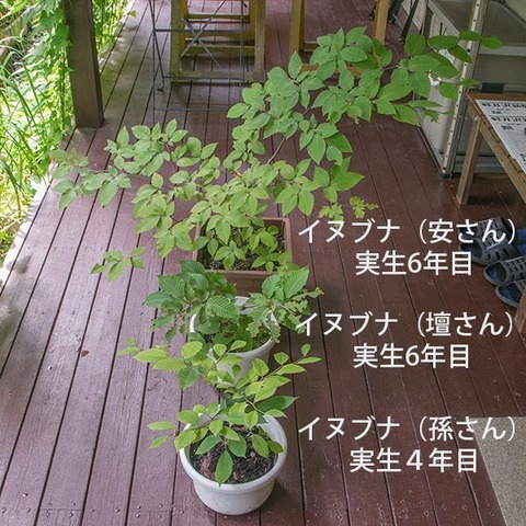 20170814inubuna_4&6y_an_dan_son_01.jpg