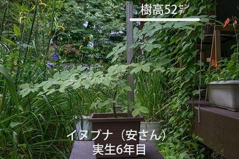20170814inubuna_6y_an_01.jpg