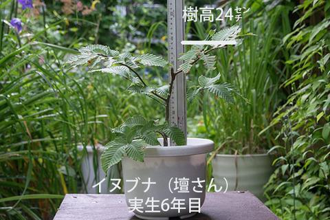 20170814inubuna_6y_dan_01.jpg