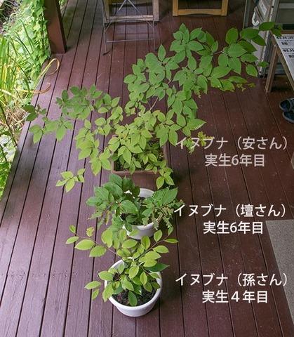 20170826inubuna_4&6y_an_dan_son_01.jpg