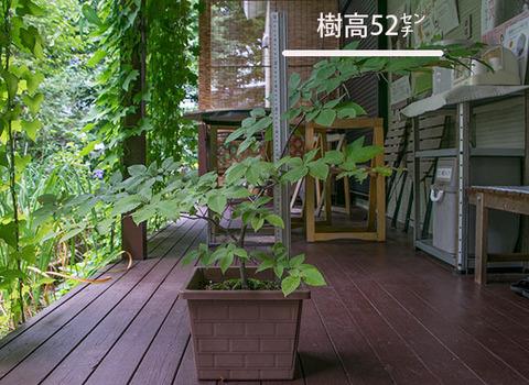 20170826inubuna_6y_an_01.jpg