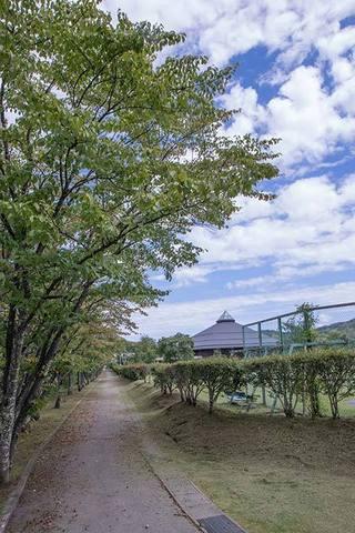 20170901yagasaki-sakura01.jpg