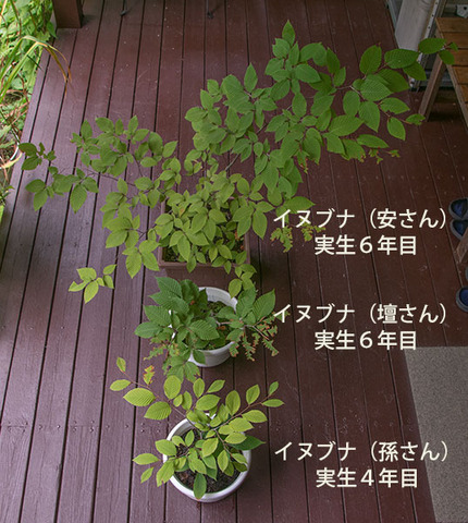 20170911inubuna_4&6y_an_dan_son_01.jpg