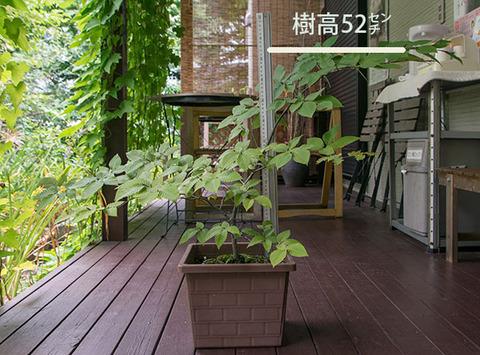 20170911inubuna_6y_an_01.jpg