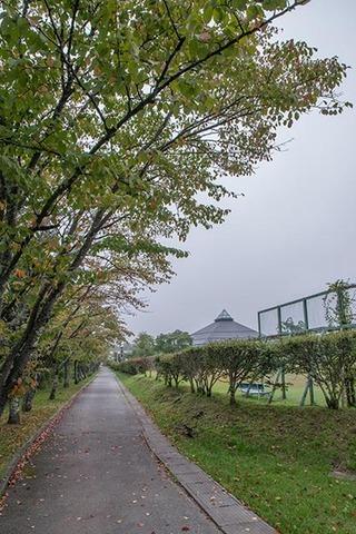 20170916yagasaki-sakura01.jpg