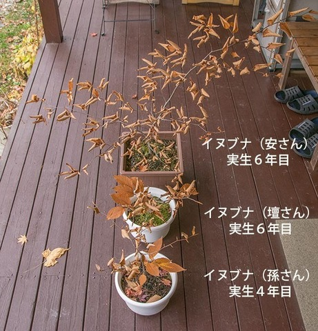 20171108inubuna_4&6y_an_dan_son_01.jpg