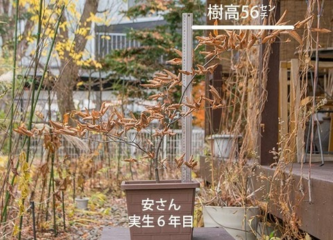 20171108inubuna_6y_an_01.jpg