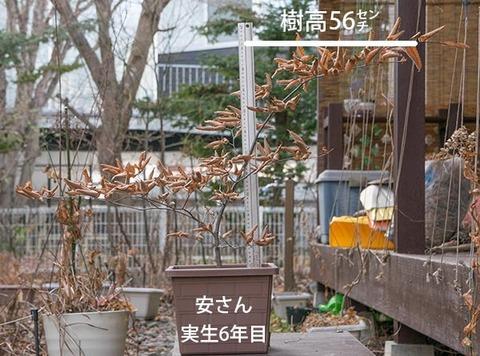 20171125inubuna_6y_an_01.jpg
