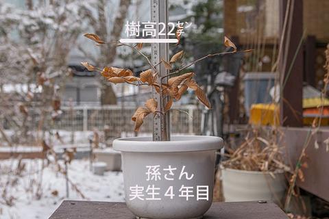 20180108inubuna_4y_son_01.jpg