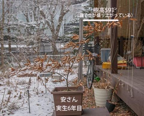 20180108inubuna_6y_an_01.jpg