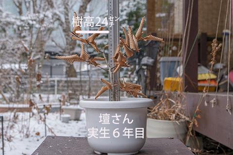 20180108inubuna_6y_dan_01.jpg