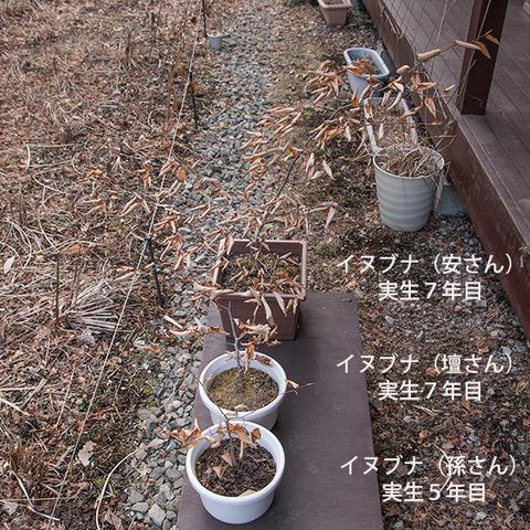 20180401inubuna_5&7y_an_dan_son_01.jpg