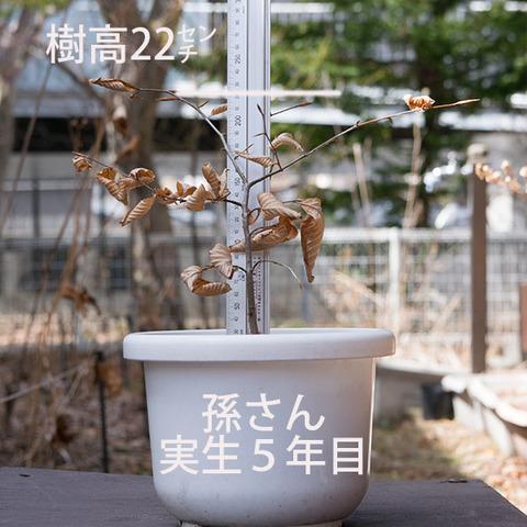 20180401inubuna_5y_son_01.jpg