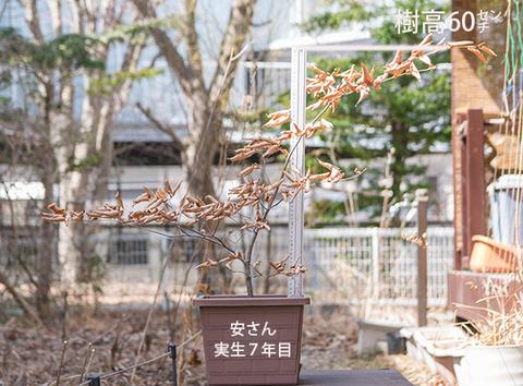 20180401inubuna_7y_an_01.jpg