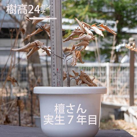 20180401inubuna_7y_dan_01.jpg