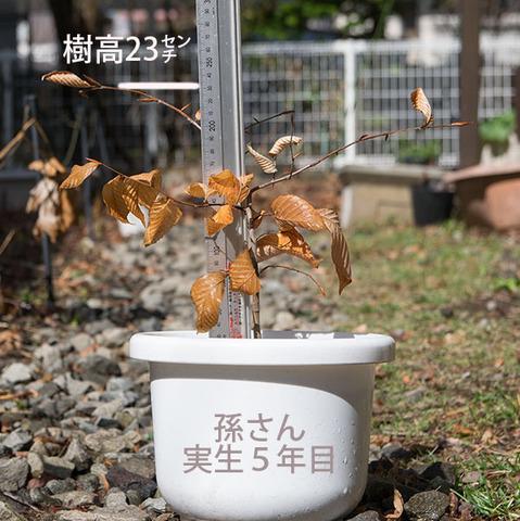 20180415inubuna_5y_son_01.jpg