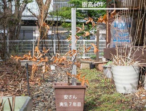 20180415inubuna_7y_an_01.jpg