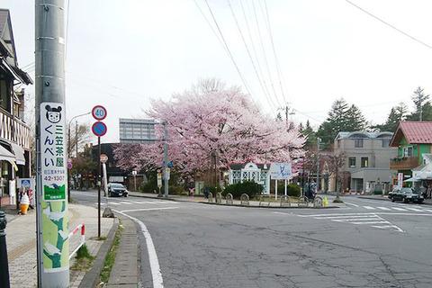 20180416rotary-sakura01.jpg