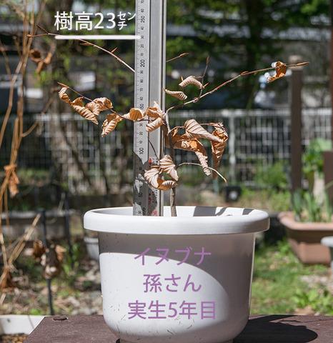 20180426inubuna_5y_son_01.jpg