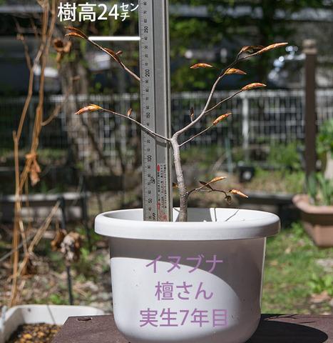 20180426inubuna_7y_dan_01.jpg